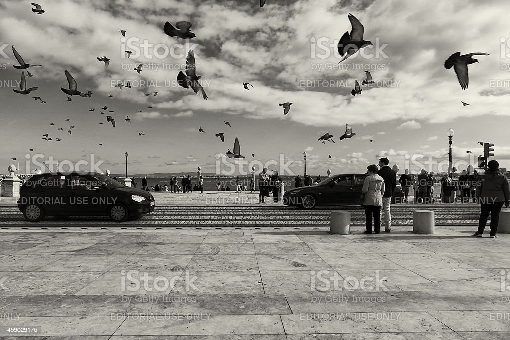 Pigeons Flying in Lisbon royalty-free stock photo