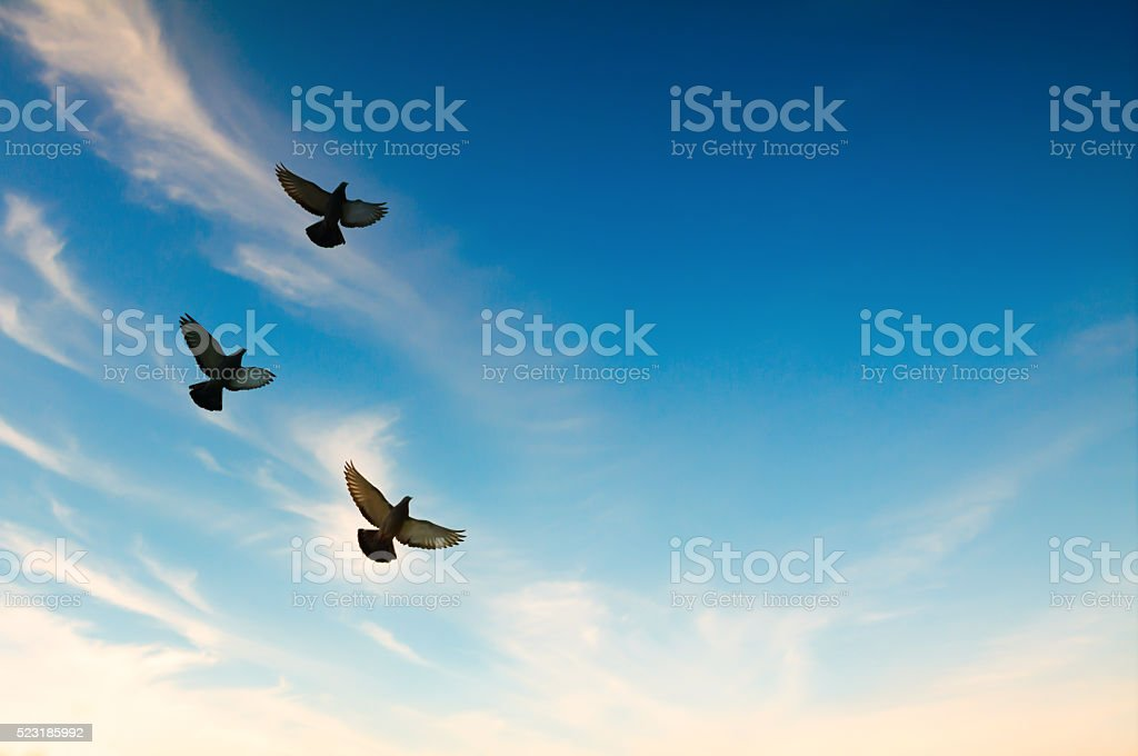 Pigeons flying in the blue sky stock photo