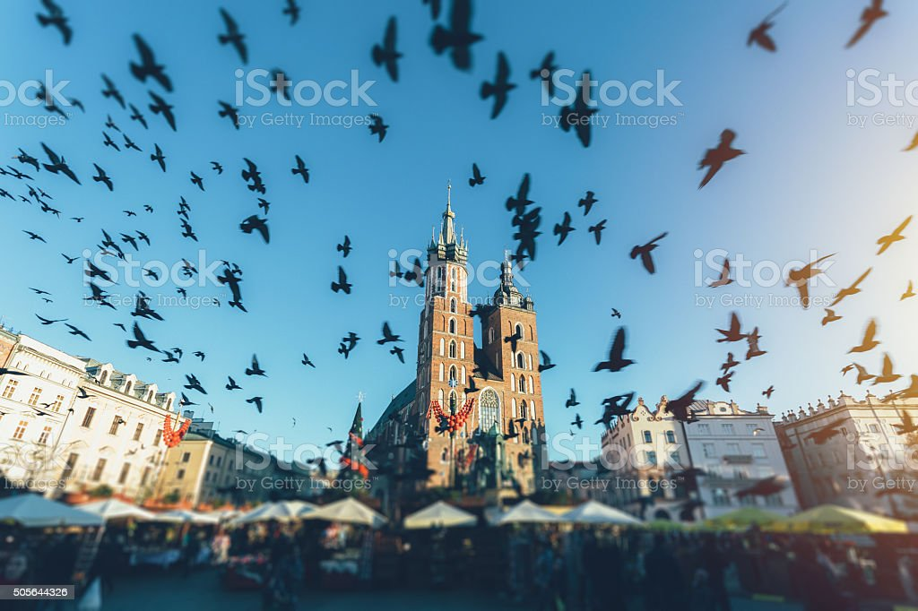 Pigeons flying over Krakow city stock photo