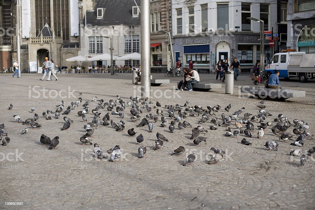 Pigeons in Amsterdam stock photo