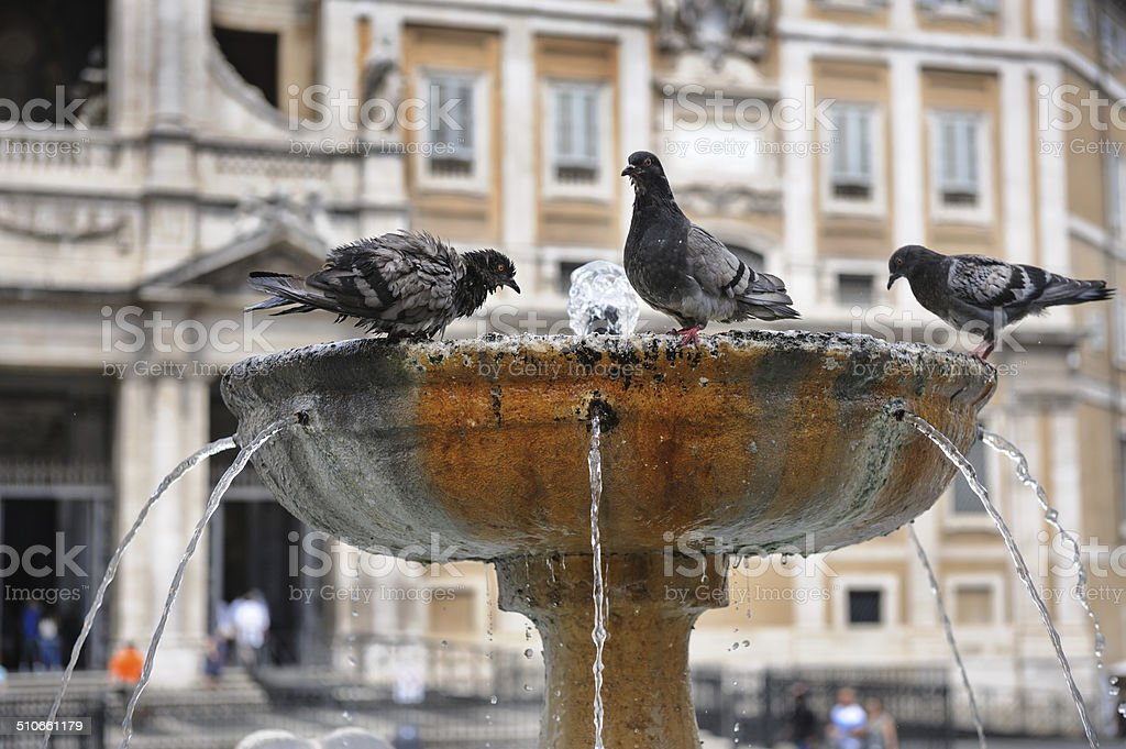 Pigeons in fountain stock photo