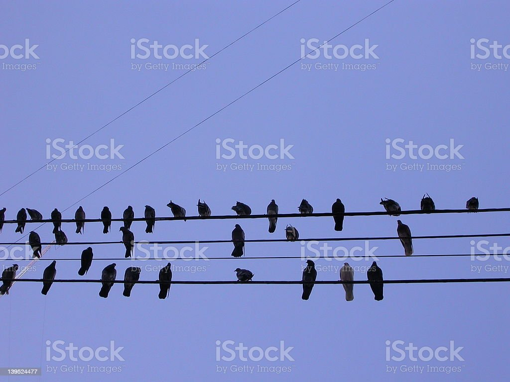 pigeons on a cable in buenos aires royalty-free stock photo