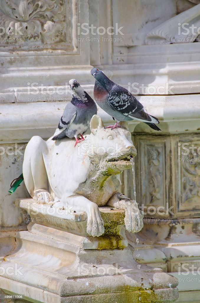 Pigeons on Drinking Wolf Sculpture in Fonte Gaia, Siena, I stock photo