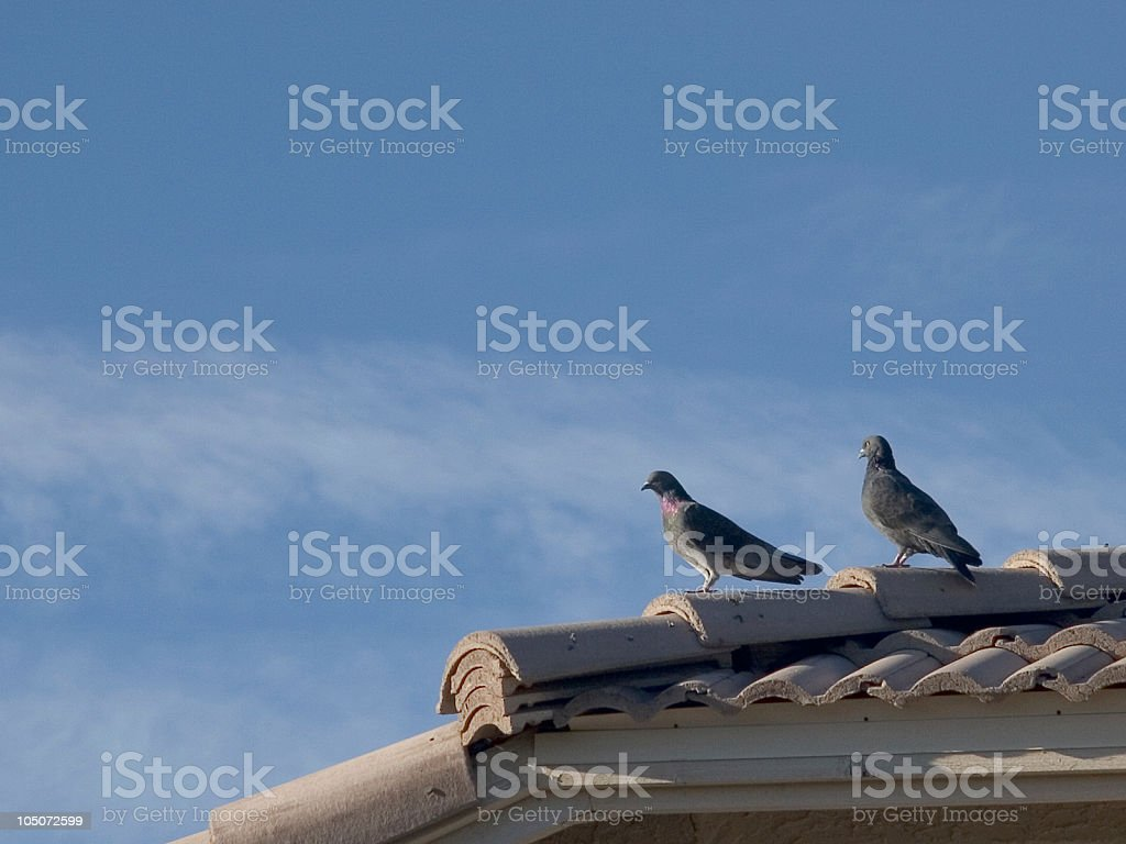 Pigeons on Roof royalty-free stock photo