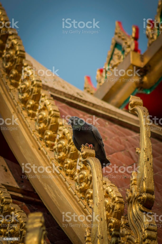 Pigeons on the church roof. stock photo