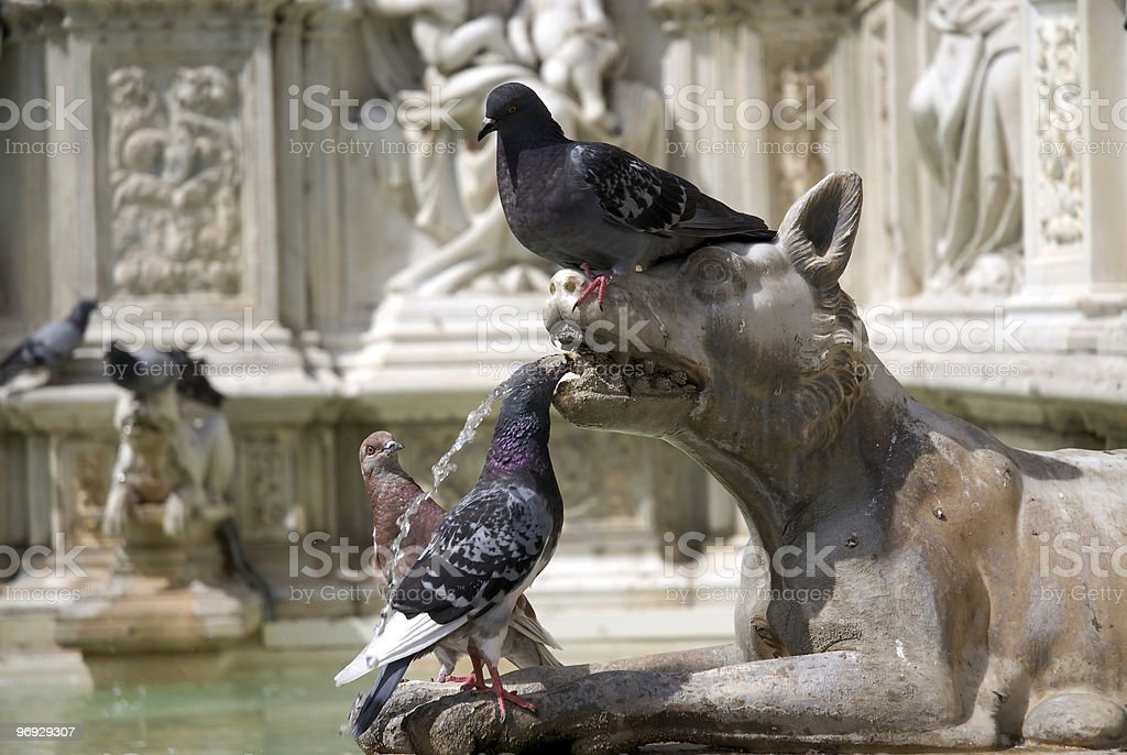Pigeons on the Fonte Gaia fountain, Siena (Italy) royalty-free stock photo
