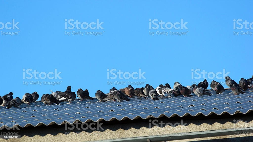 Pigeons on the roof against blue sky background stock photo