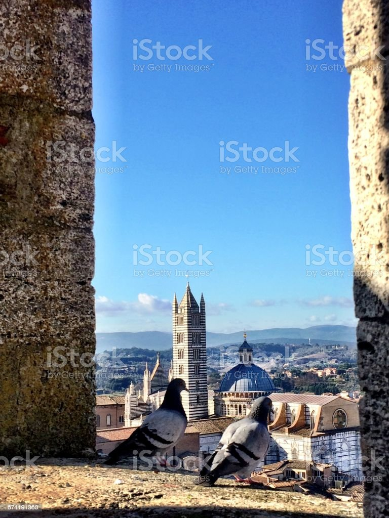 Pigeons on the Torre del Mangia stock photo