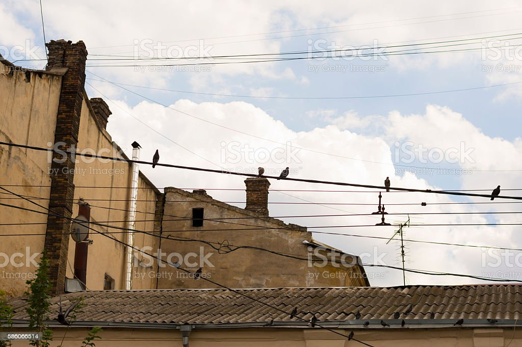 Pigeons on Wire and Roof stock photo