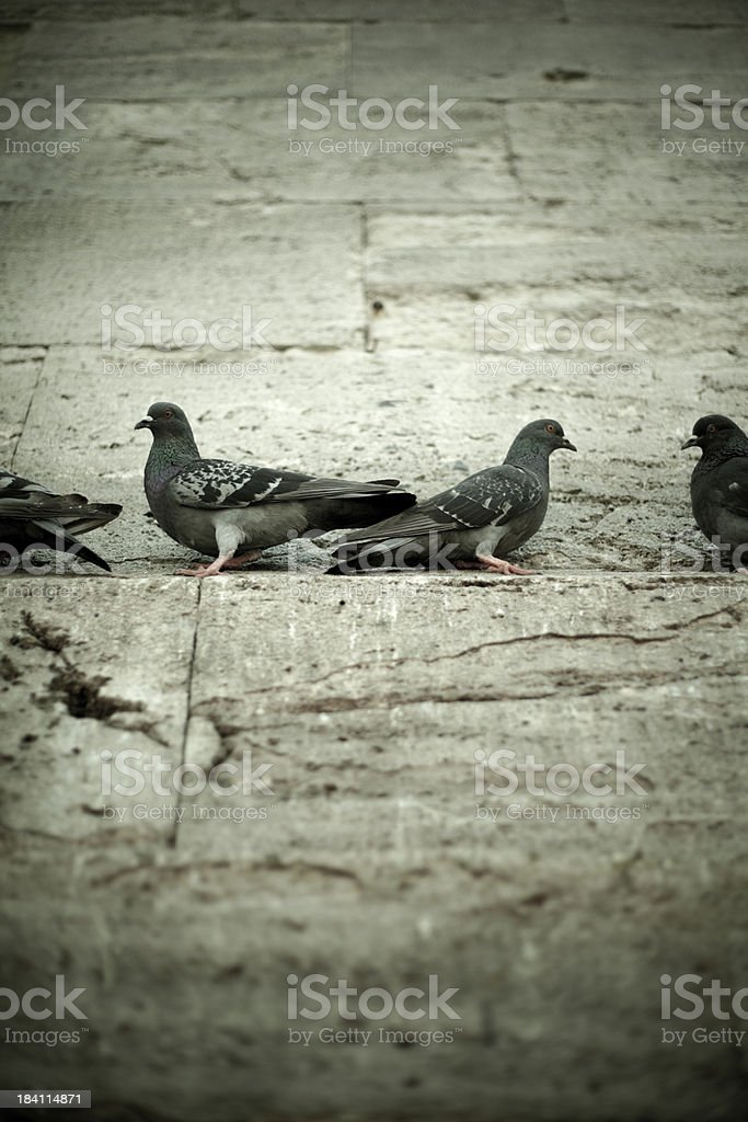 Pigeons On Yeni Camii Mosque Wall stock photo