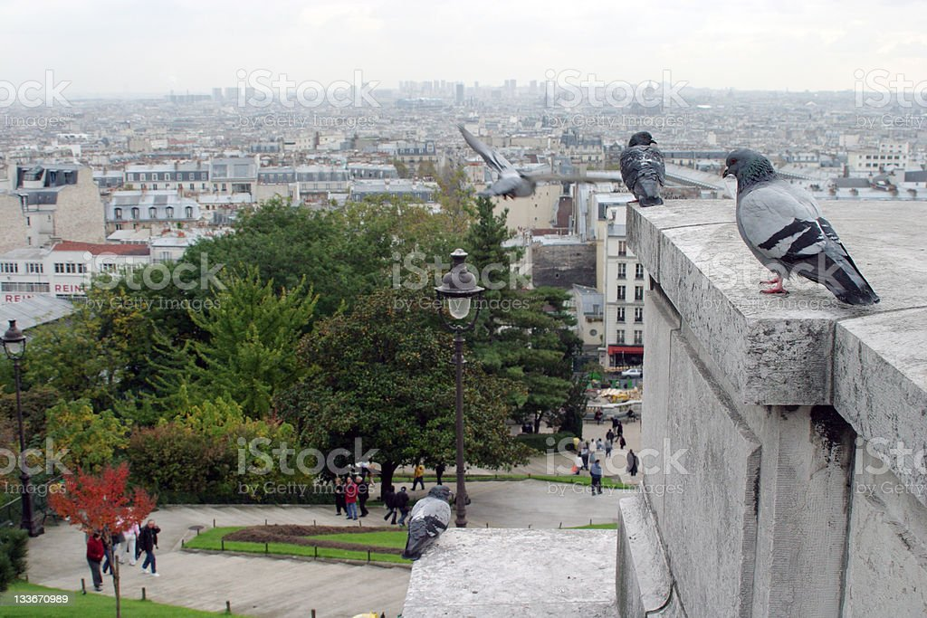 pigeons overlooking city royalty-free stock photo