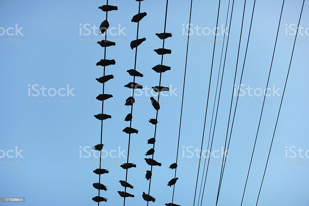 Pigeons sitting on electrical wires against blue sky royalty-free stock photo
