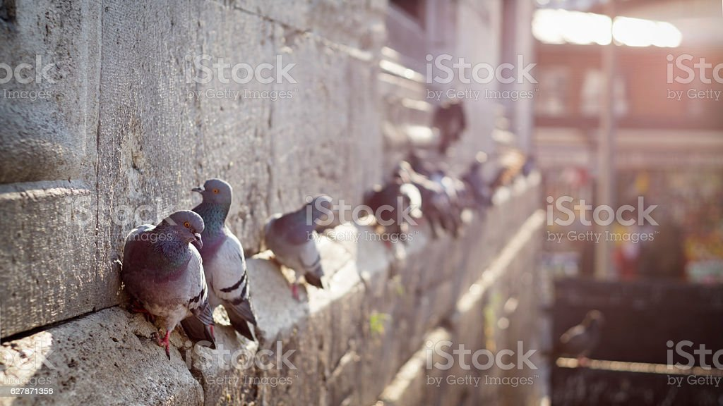 Pigeons Standing On The Wall Of New Mosque, Istanbul, Turkey stock photo