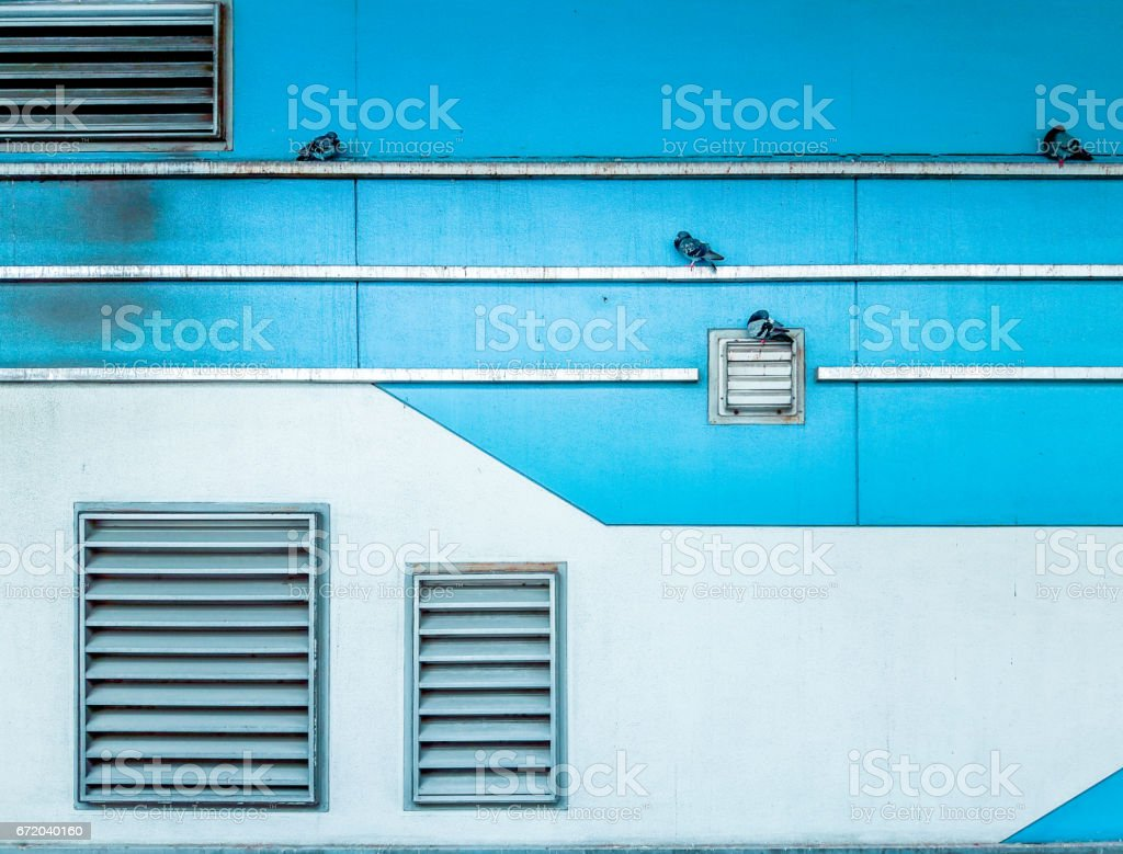 Pigeons sticking to the green wall, air ventilation, street snap stock photo
