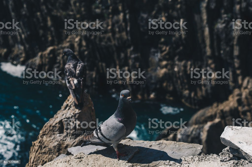 2 pigeons taking rest at five lands Italy stock photo