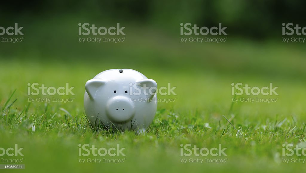piggy bank in nature stock photo