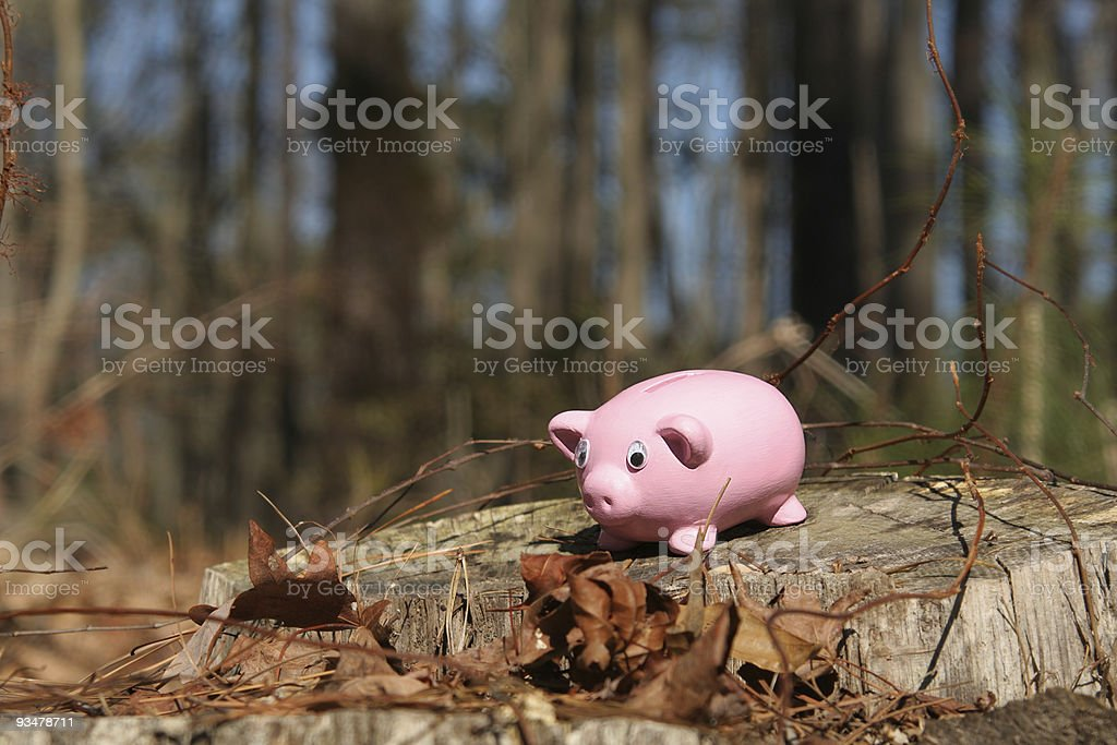 Piggy Bank: Lost in Woods stock photo
