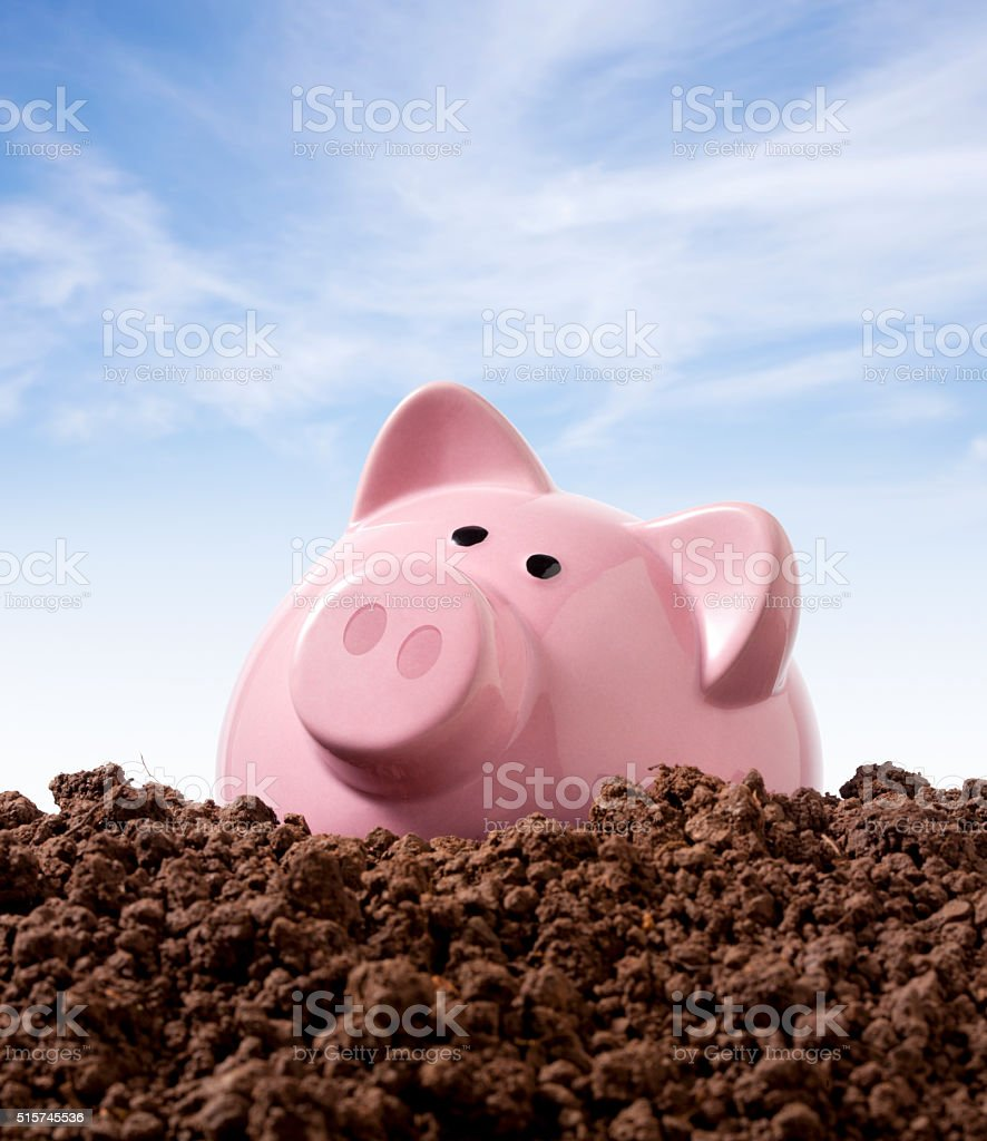 Piggy bank on soil. Planting seeds for the future. stock photo