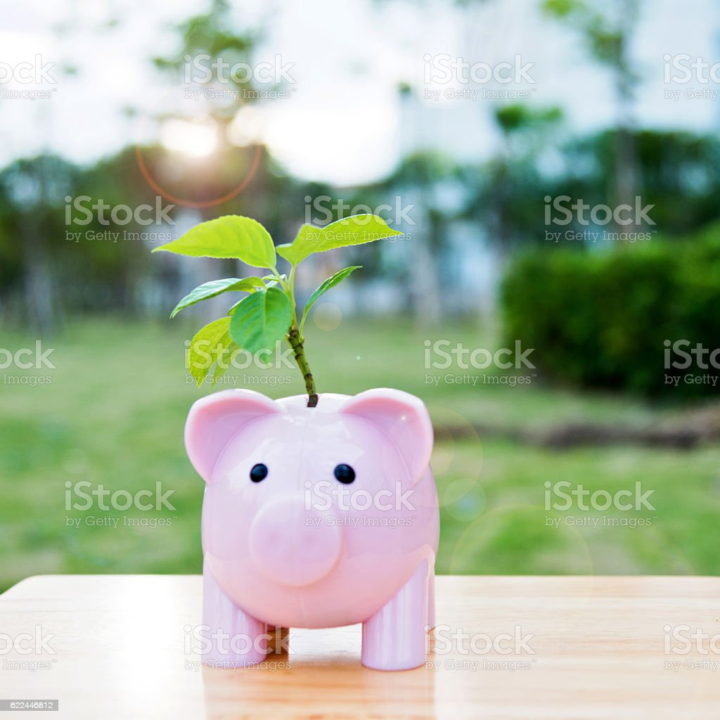 Piggy bank with plant on top stock photo