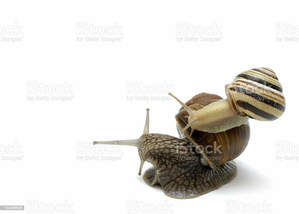 Piggyback Snail Note royalty-free stock photo