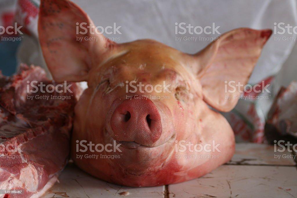 Pig's head royalty-free stock photo