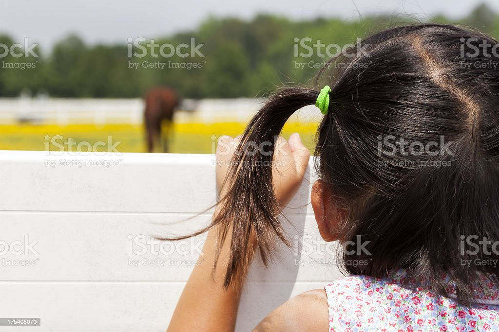 Pig-tailed girl watching horse royalty-free stock photo