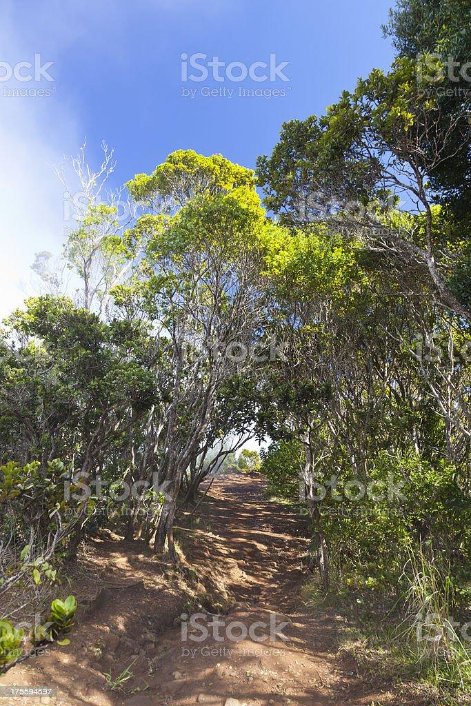 Pihea Trail, Kauai stock photo