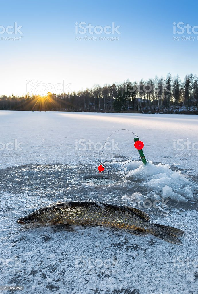 Pike ice fishing at evening stock photo