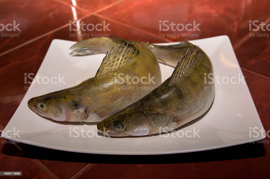 Pike perch fish on white plate stock photo
