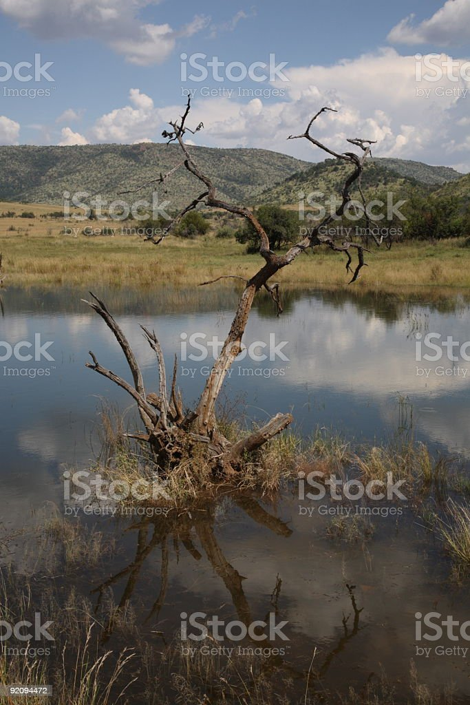Pilanesberg National Park in South Africa royalty-free stock photo