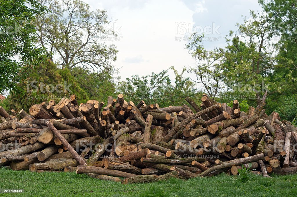 Pile in the woods. stock photo