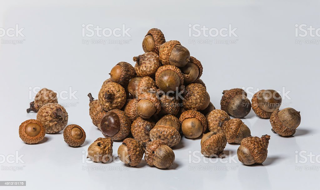 Pile of Acorns ready for the winter stock photo