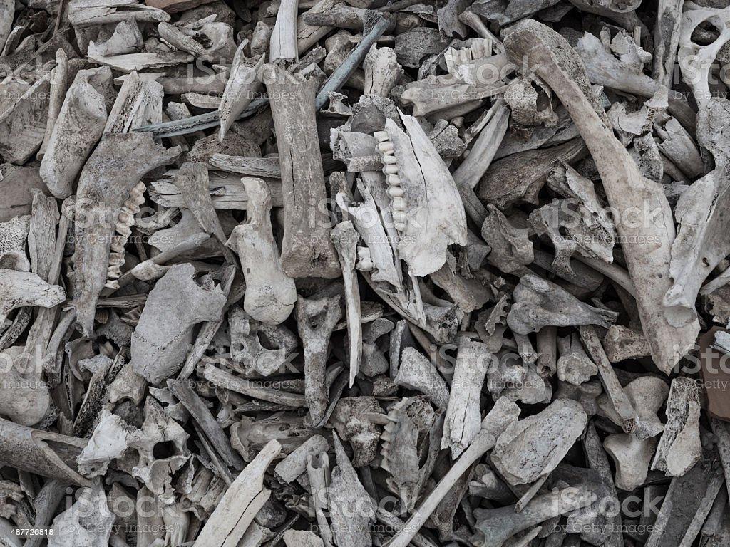 Pile of animal bones stock photo