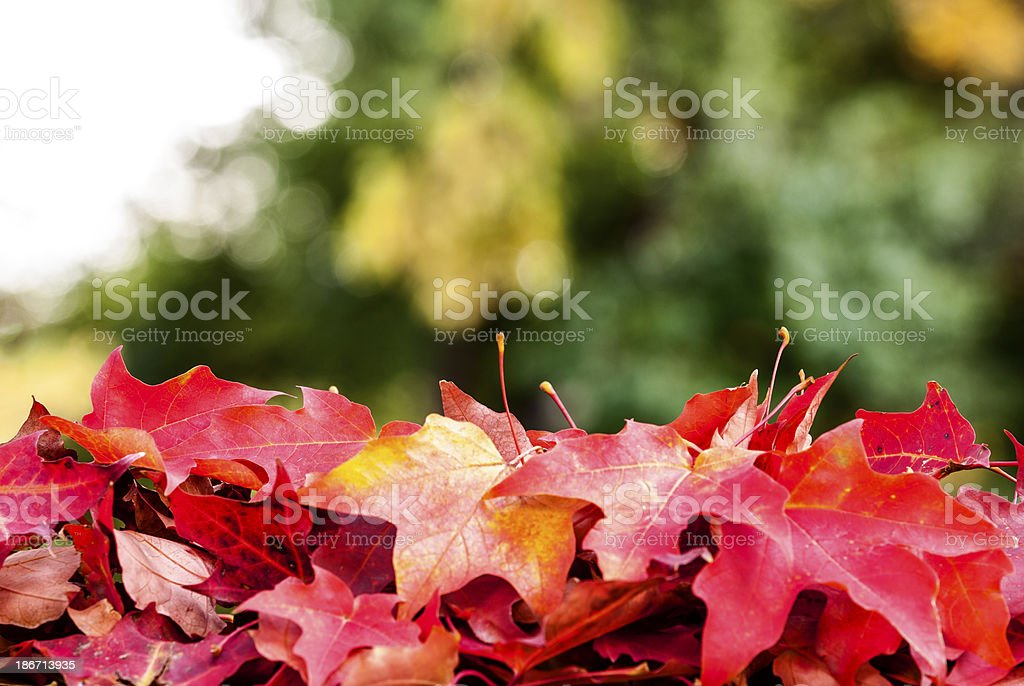 Pile of Autumn leaves royalty-free stock photo