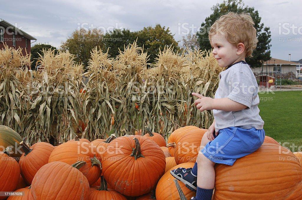 Pile of Autumn Pumkins royalty-free stock photo