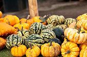 pile of autumn pumpkins on market farm