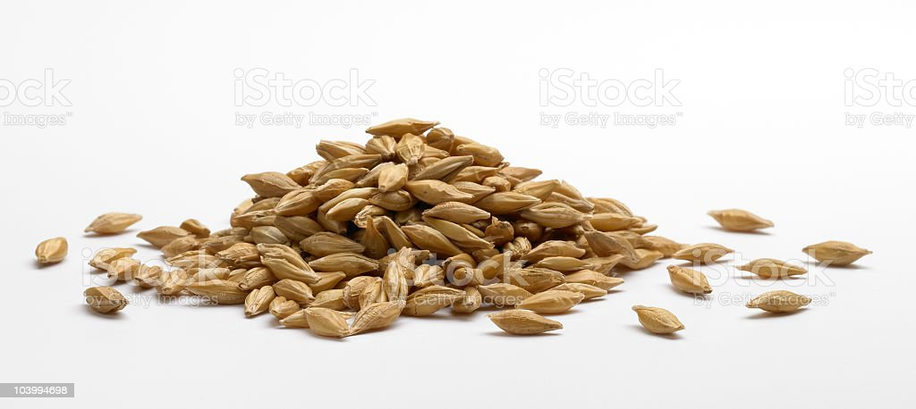Pile of barley stock photo