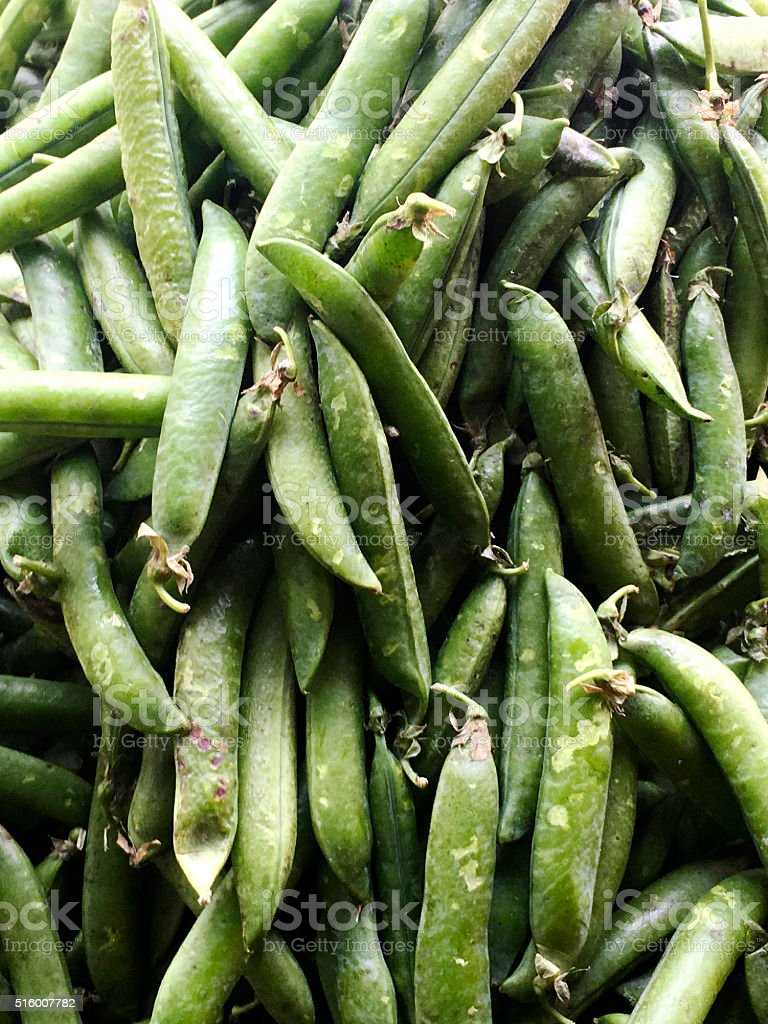Pile of Broad Beans stock photo