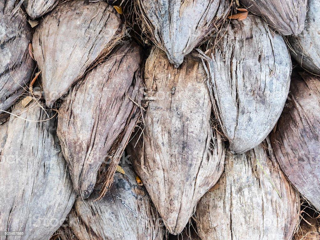 Pile of coir husk stock photo