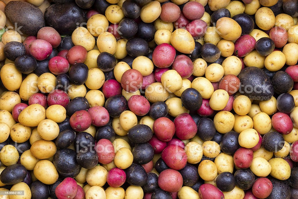 Pile of colorful potatoes royalty-free stock photo