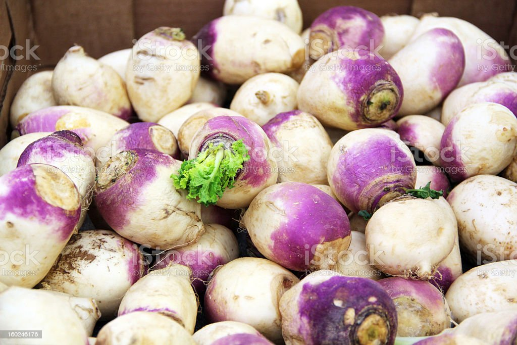 Pile of Colorful White and Purple Turnips royalty-free stock photo