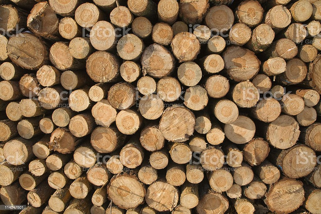 Pile of coniferous fire-wood stock photo