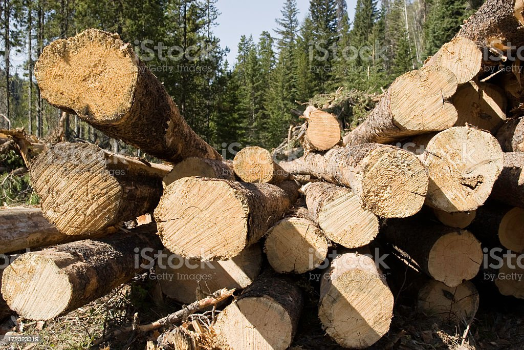 A pile of cut logs viewed from the ends royalty-free stock photo