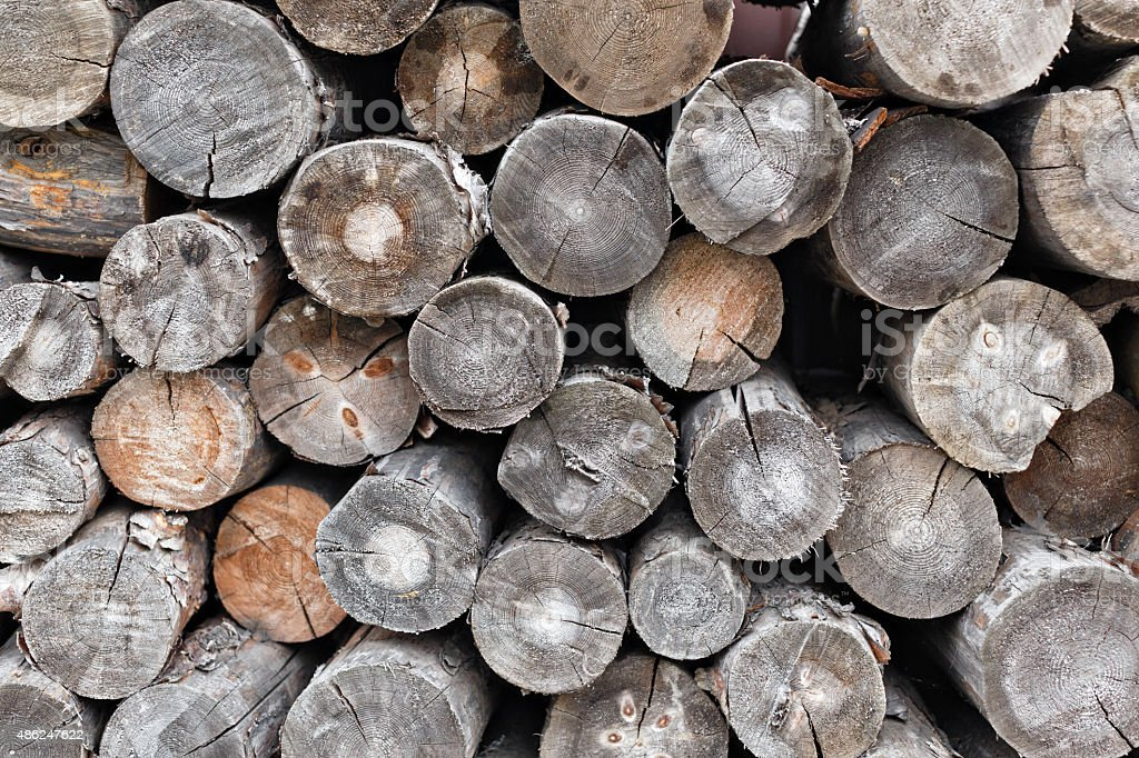 Pile of cut tree trunks and logs with concentric rings stock photo