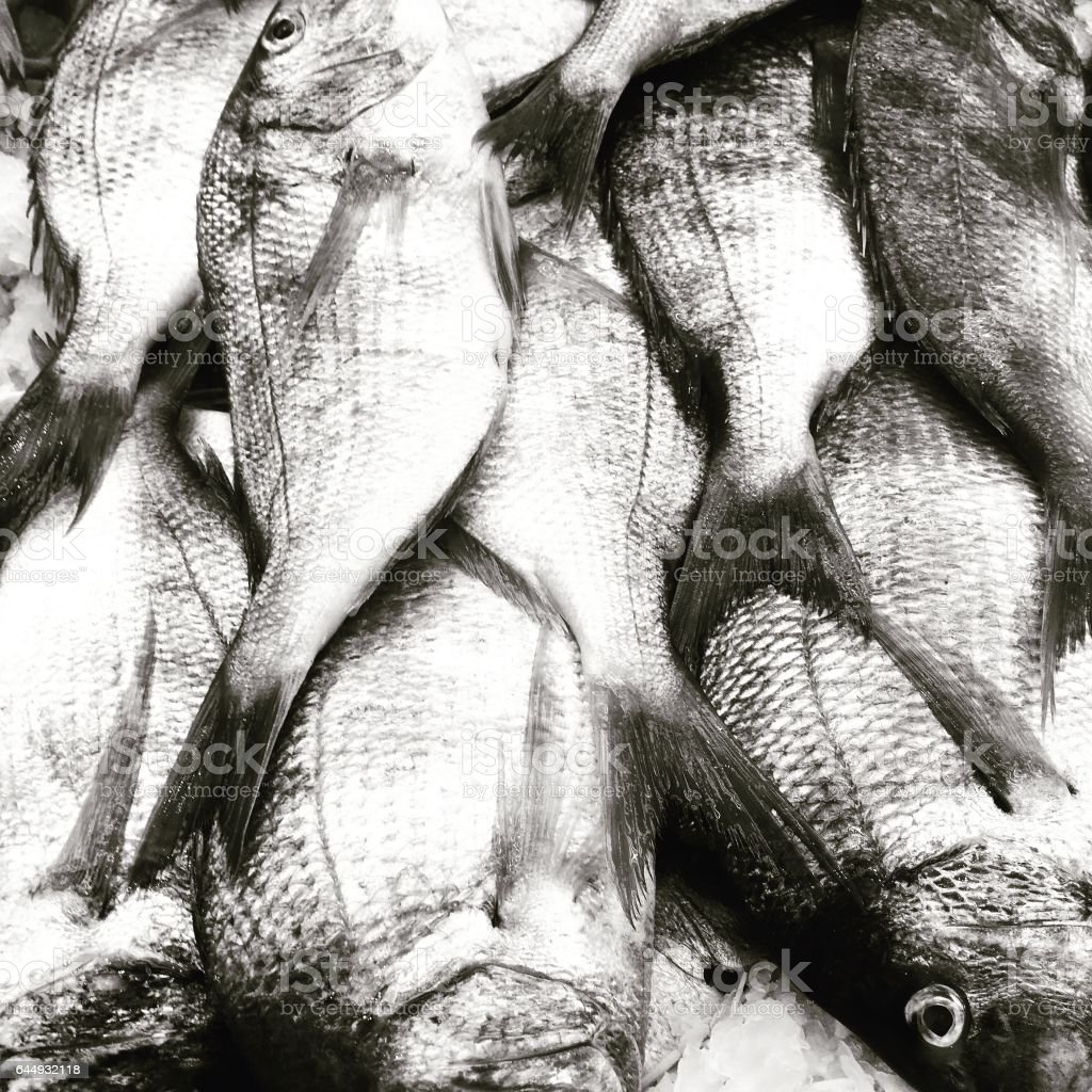 Pile of dead fish on ice at the Chinatown fish market in Flushing, Queens, New York.  Outdoor Asian fish market.  High contract. Black and white photography. stock photo