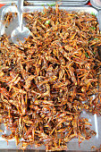 pile of deep fried grasshoppers