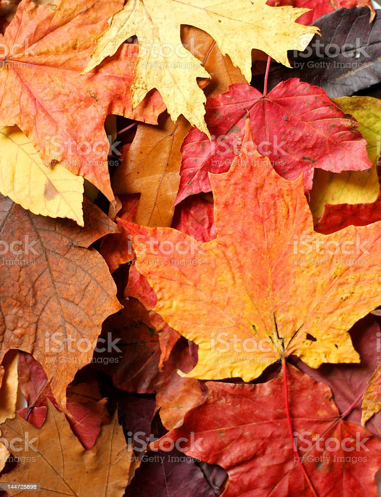 Pile of dried autumn leaves royalty-free stock photo