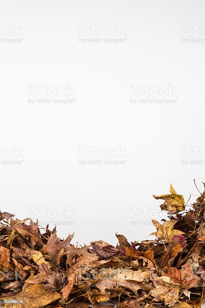 Pile of dried fall leaves stock photo