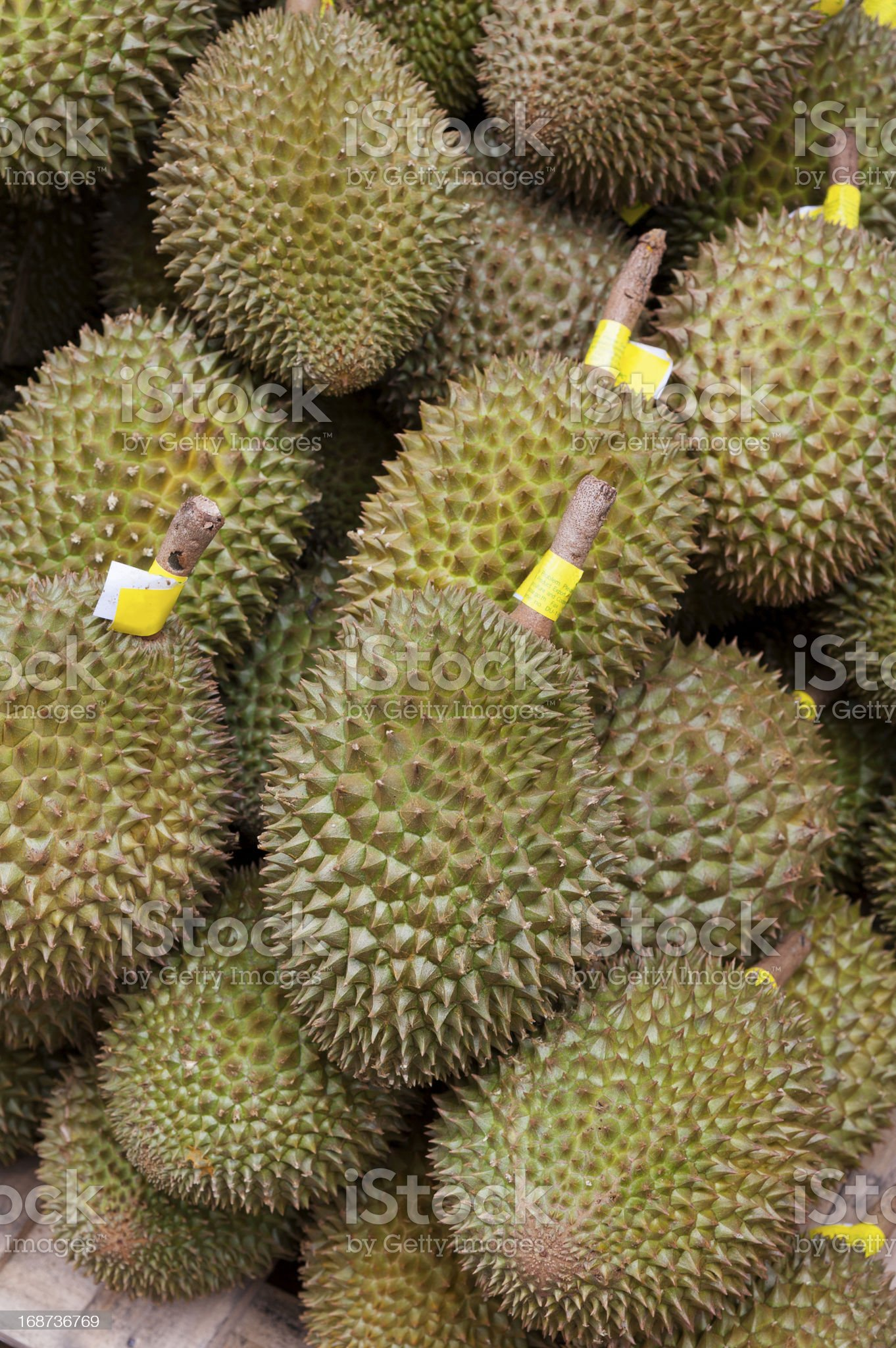 Pile of durian fro sale in local market royalty-free stock photo