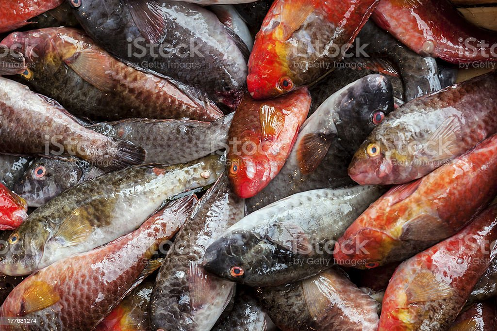 Pile of  fish on ice royalty-free stock photo